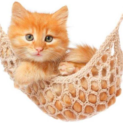 Pet Care Provider Ziad Daniel's Profile Picture