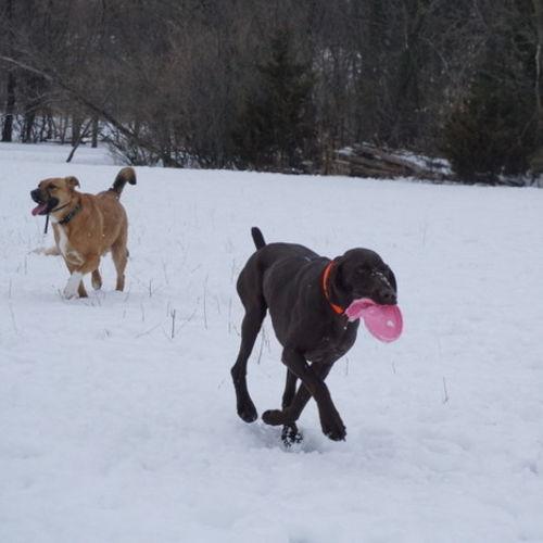 Pet Care Provider Anja M Gallery Image 3