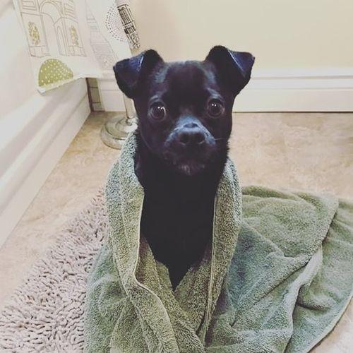 Pet Care Job Lauren Onslow's Profile Picture