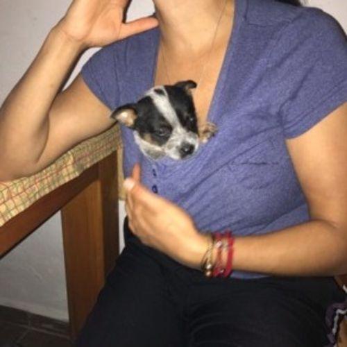 Pet Care Provider Gabriela Perez Gallery Image 2