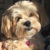 Seeking Lyndhurst Dog Sitter Opportunity