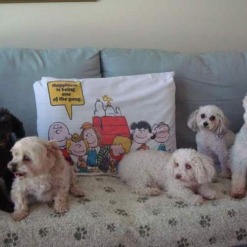 Pet Care Provider Deborah D Gallery Image 2