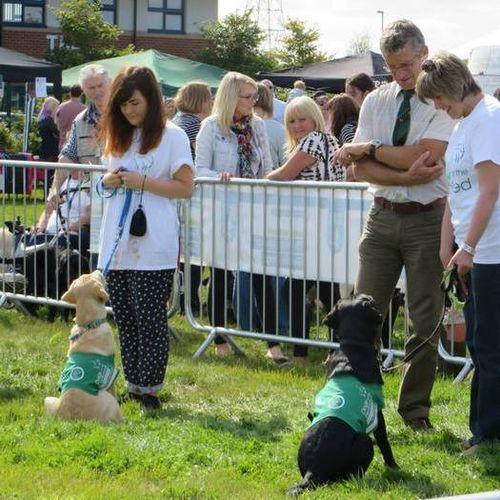Pet Care Provider Ella D Gallery Image 2
