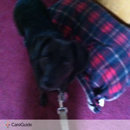 Pet Care Provider David Brumberg's Profile Picture