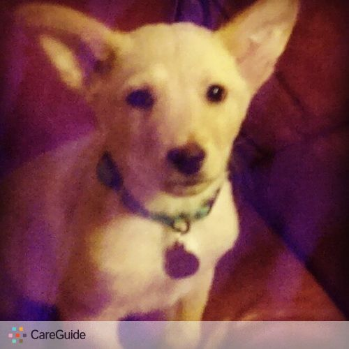 Pet Care Provider Ashley Staton's Profile Picture