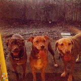3 fun Loving Pups need food and BR breaks - ST PETE