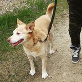 Dog Walker Job, Pet Sitter Job in Winnipeg