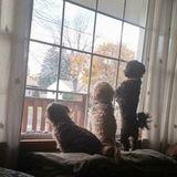 Lancaster, New York Pet Service Provider
