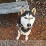Dog Walker, Pet Sitter in Maryville