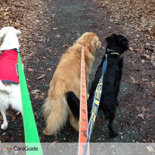Puppy Trails-dog walking at your home