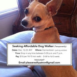 Dog Walker Job in Nashville