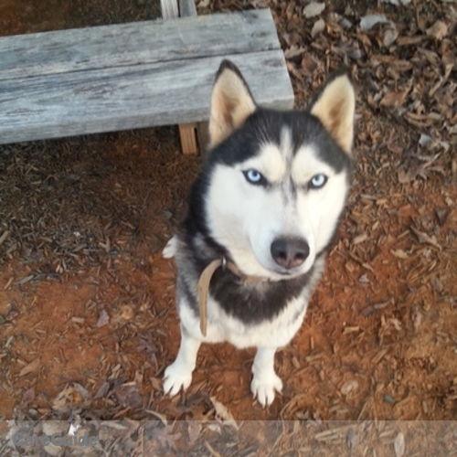 Pet Care Provider Megan Cupp's Profile Picture