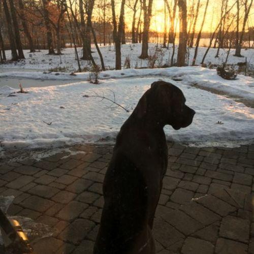 Pet Care Provider Melissa Schulte's Profile Picture