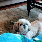 Needed: a Trustworthy Pet Supervisor in Penticton, British Columbia