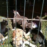 Dog Walker, Pet Sitter in Savannah