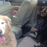 Dog walker and Pet sitter available Parksville area