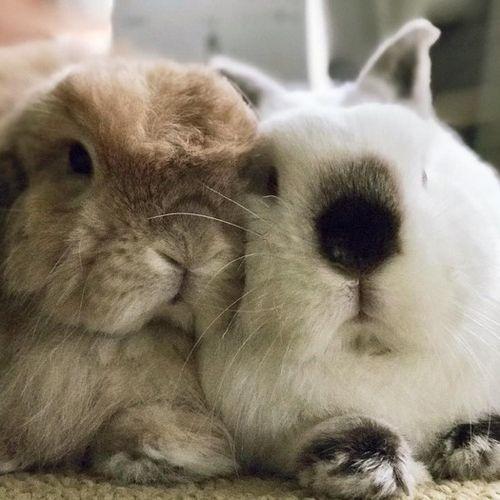 Pet Care Provider Nastazia B's Profile Picture