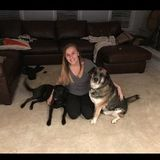 Gainesville Petsitter Available For Being Hired