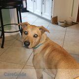 Dog Walker, Pet Sitter in Spring