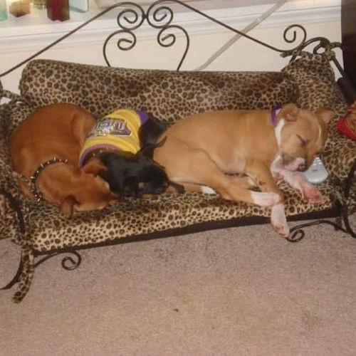 Pet Care Provider Bonnie McCullough Gallery Image 1