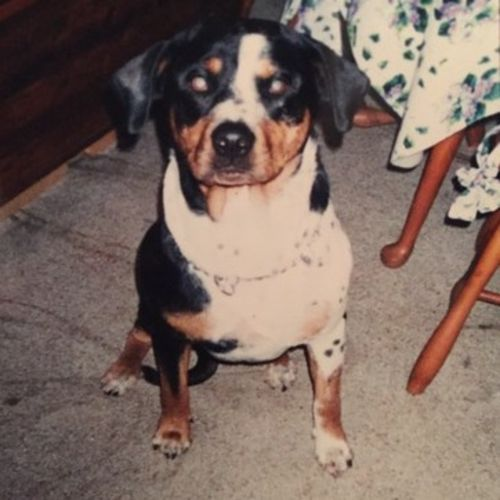 Pet Care Provider Lindalu T's Profile Picture