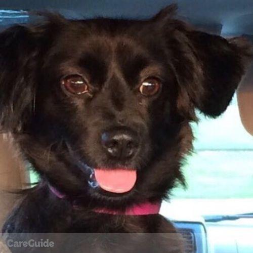 Pet Care Provider Victoria Mexicano's Profile Picture
