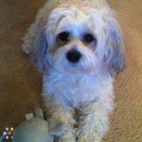 Dog Walker Needed - Nanuet, NY