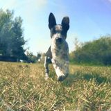 Available: Well Trained Pet Sitter in Casper