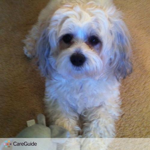 Pet Care Job Stephanie Cohen's Profile Picture