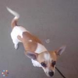 Dog Walker, Pet Sitter in Van Nuys