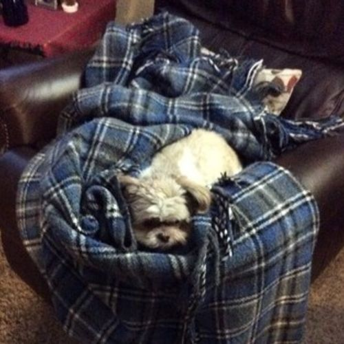 Pet Care Job Lisa S Gallery Image 2