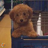 Sitter for puppy