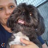 Dog Walker, Pet Sitter in Malden