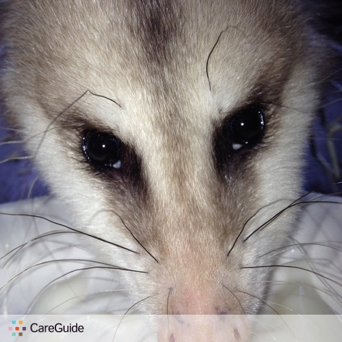 Pet Care Provider Noah Sprimont's Profile Picture