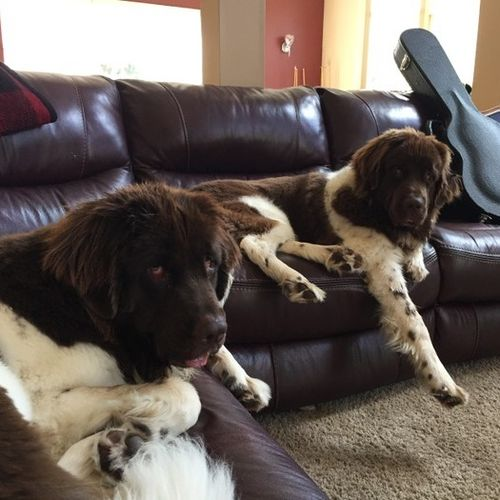 Pet Care Provider Amy S Gallery Image 1
