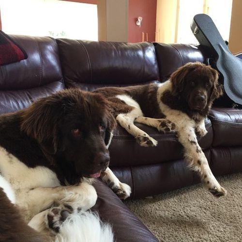 Pet Care Provider Amy Sclafani Gallery Image 1