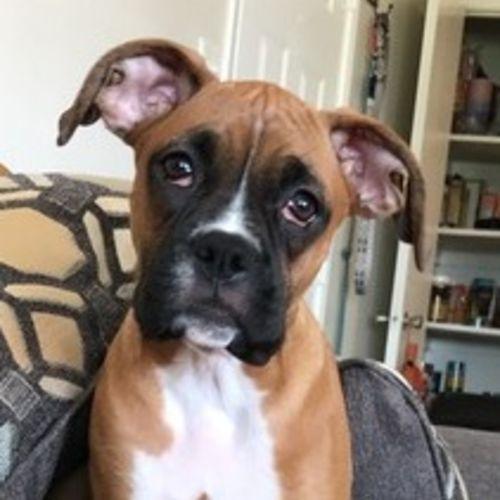 Pet Care Provider Kaitlyn Headlee Gallery Image 1