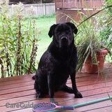 Dog Walker, Pet Sitter in Grand Haven