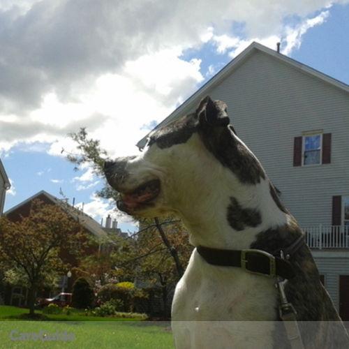 Pet Care Provider Nicholas Tjipangandjara's Profile Picture