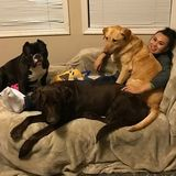 Interested In East Palo Alto Dog Sitting Professional Jobs