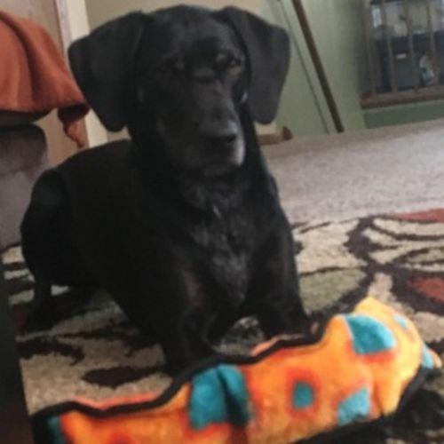 Pet Care Provider Larissa M's Profile Picture