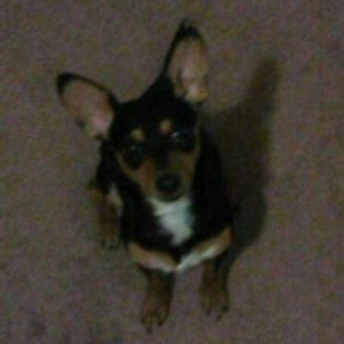 Pet Care Provider Danielle J Gallery Image 3