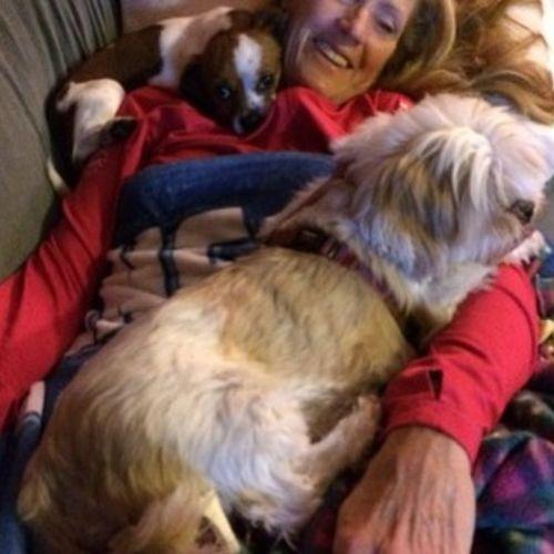 Pet Care Job Morgan McCool's Profile Picture