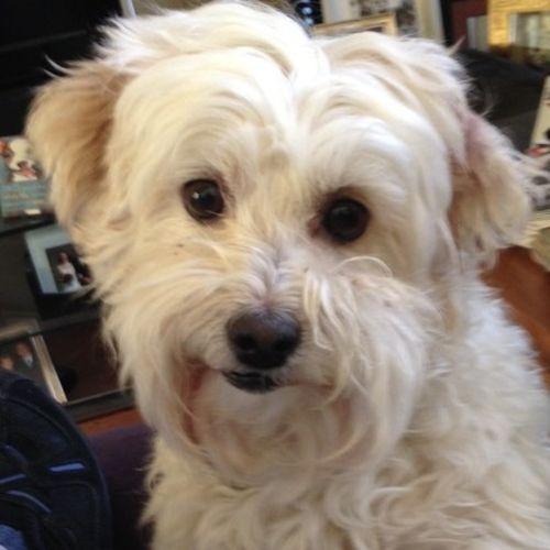 Pet Care Job Liz M's Profile Picture