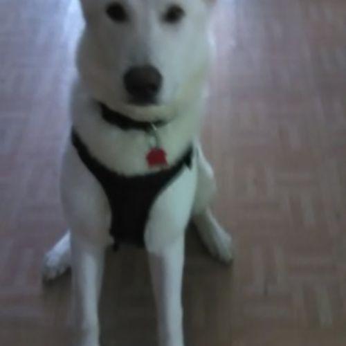 Pet Care Provider Katrina Bonnell Gallery Image 1