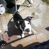 Dog Walker, Pet Sitter in Placerville