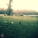 Dog Walker, Pet Sitter in Maple Valley