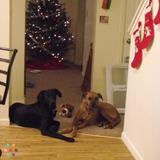 Dog Walker, Pet Sitter in Woodbridge