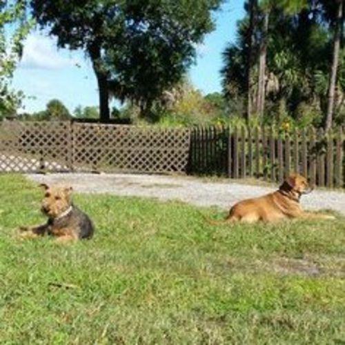 Pet Care Provider Lillian Villanova Gallery Image 2
