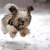 Dog Walker, Pet Sitter in Lethbridge